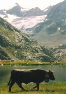 Alpage de Charmotane