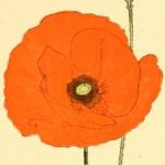 Illustration du profil de Le Coquelicot